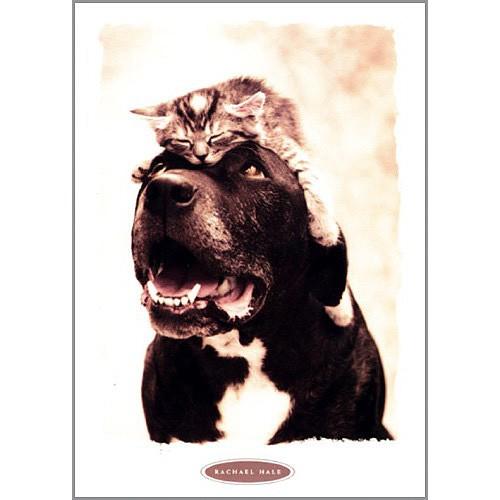 Blahopřání Rachael Hale Zubatý pes s kotětem