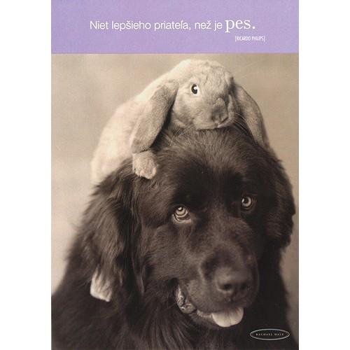 Blahopřání Rachael Hale králik na hlave psa
