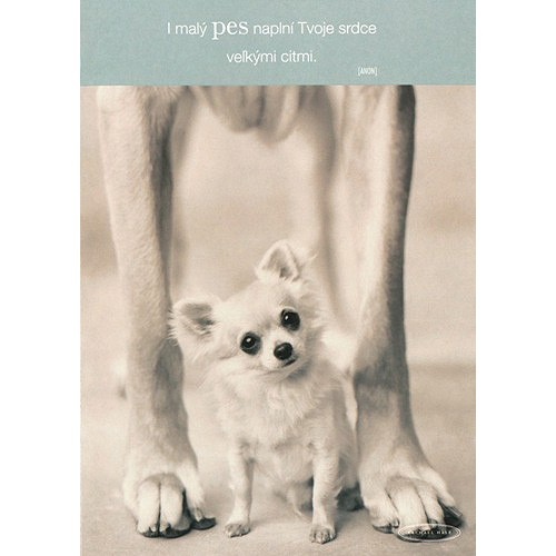 Blahopřání Rachael Hale psíček medzi nohami