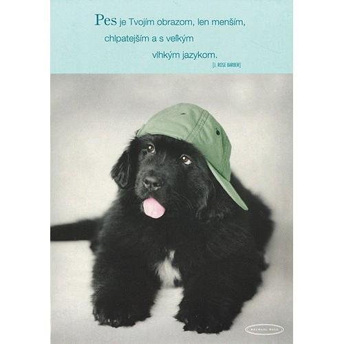 Blahopřání Rachael Hale pes so zelenou šiltovkou