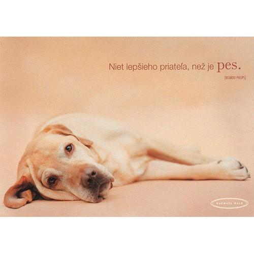 Blahopřání Rachael Hale pes ležiaci