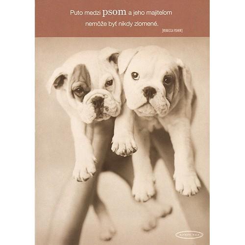 Blahopřání Rachael Hale dvaja psi na rukách