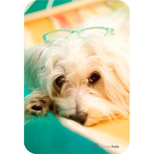 Blahopřání Rachael Hale Toby - pes s brýlemi