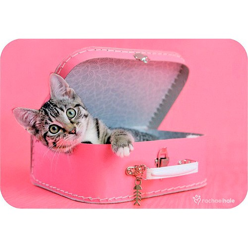 Blahopřání Rachael Hale Peaches - kočka v kufru