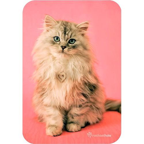 Blahopřání Rachael Hale Monty kočka se srdcem