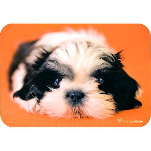 Blahopřání Rachael Hale Patches pes na oranžovo