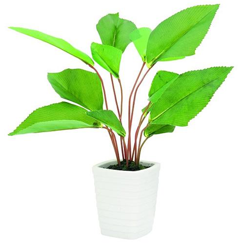 Vějířovitá rostlina Europalms výška 45 cm