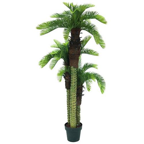Palma trio Europalms výška 150 cm