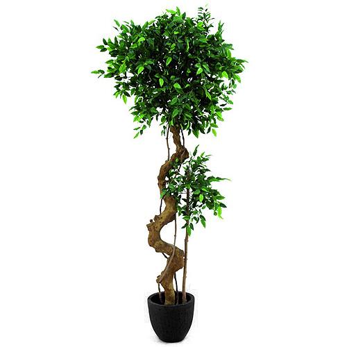 Fíkus bonsai Europalms výška 170 cm
