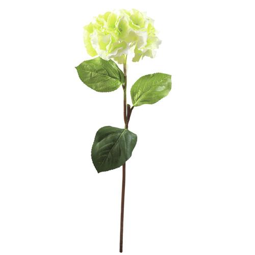 Hortenzie Europalms Výška 76 cm/zelená