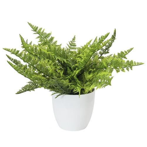 Kapradí Europalms Výška 33 cm/zelené