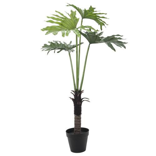 Rostlina Split Philo Europalms Výška 120 cm